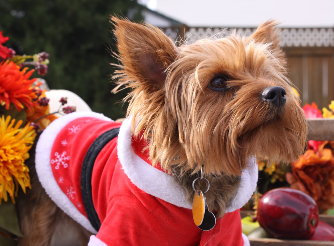 holiday health hazards to pets