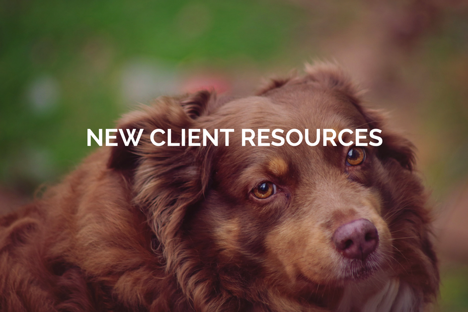New veterinary Client Resources tracy animal hospital
